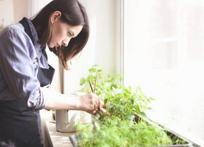 woman growing vegetables on windowsill